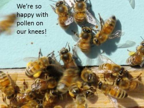 Figure 5: Pollen on My Knees -- see related blog posted earlier