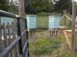 Hives prepped for harvesting.