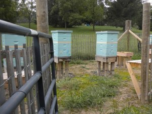 Hives prepped for harvesting.